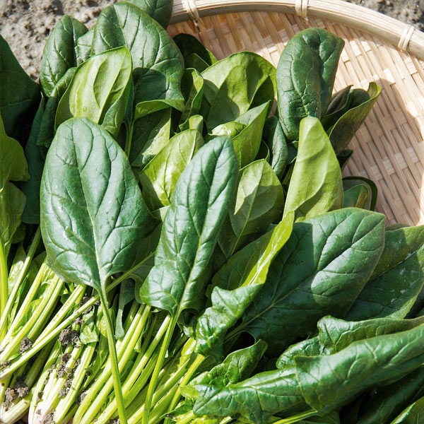 Spinat-Speck-Salat-2